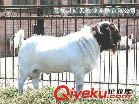 【肉羊销售火爆品种】波尔山羊种羊,波尔山羊肉羊,波尔山羊羊羔(图)