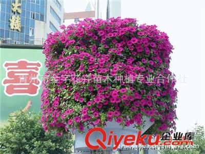 出售铁艺花树 花球 花柱等立体园林用品400-6627727