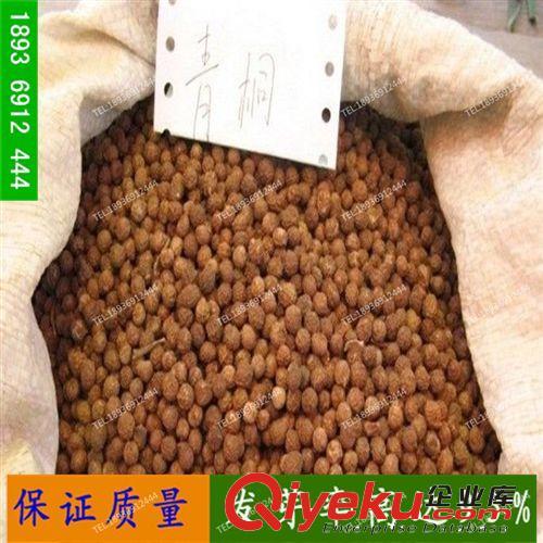 出售新采收 青桐种子 青皮梧桐树种子 绿化苗木 保证发芽率