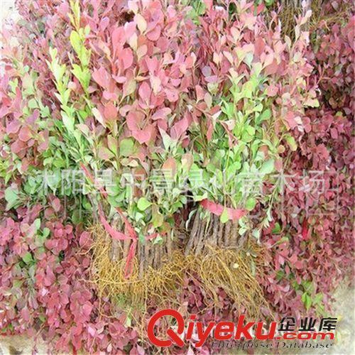 乔灌木植物图例