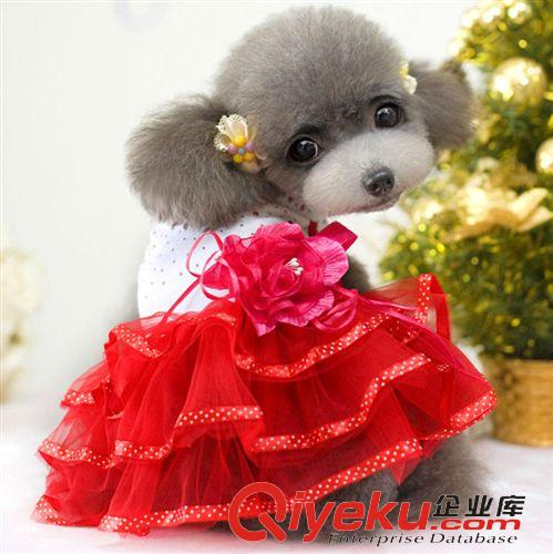 夏装狗狗衣服日本泰迪可爱款