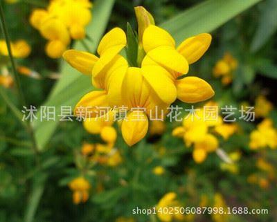 种子保证质量图片由沭阳县新河镇宝山花木园艺场提供